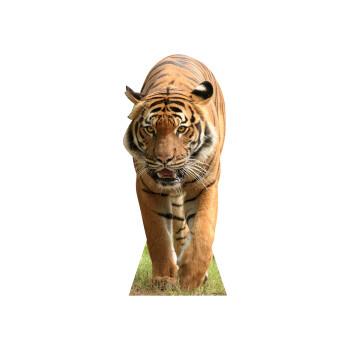 Tiger Cardboard Cutout - $44.95